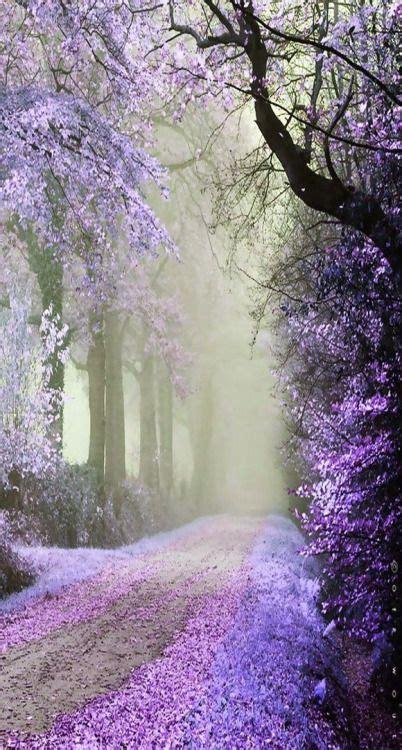 janetmillslovepurple cherry road moment love