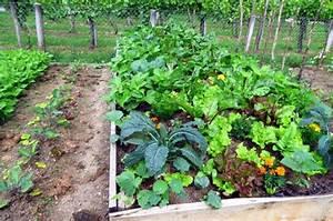 Plantes Amies Et Ennemies Au Potager : la permaculture une nouvelle fa on de jardiner ~ Melissatoandfro.com Idées de Décoration