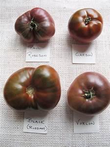 Heirloom Tomato Varieties: 2012 Roundup & Summary