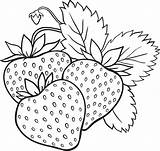 Strawberry Coloring Pages Fruits Print sketch template