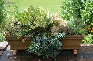 3 Container ideas for succulents SA Garden and Home