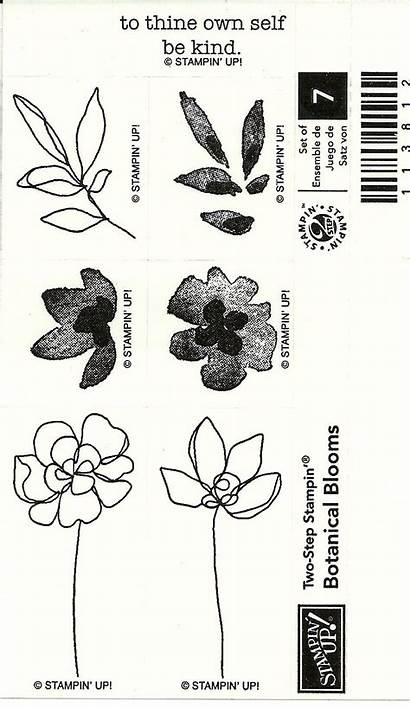 Stampin Botanical Blooms Step Retired Ecrater
