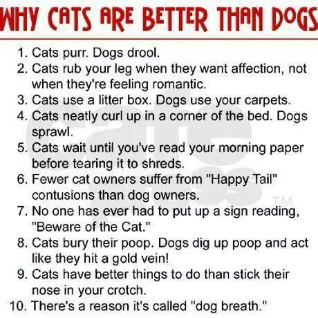 why are dogs better than cats why cats are better than dogs furry friends pinterest