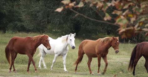 lovable deaf horses mare friend support