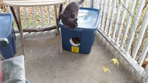 face  cost spayneuter clinicoutdoor cat shelters