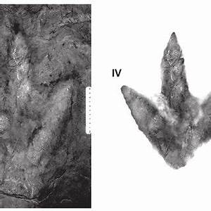 (PDF) The first evidence of dinosaur tracks in the Upper ...