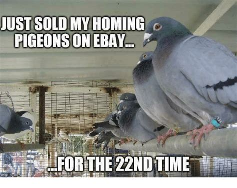 Pigeon Memes - ust sold my homing pigeons on ebay for the 22ndtime ebay meme on sizzle
