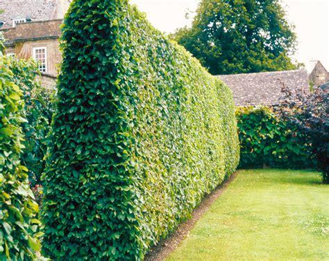 la chambre des officiers entier idee de deco jardin exterieur 4 id233e d233co jardin
