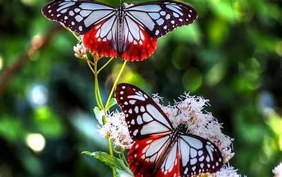 Butterfly Wallpapers Butterflies Desktop Flowers Colorful Pretty
