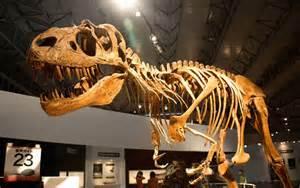 Fossil Dinosaur Bone Found