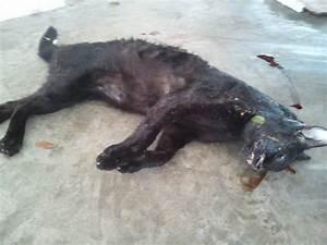 Dead Cat Images - Reverse Search