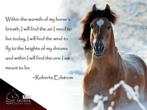 horse cowgirl quotes