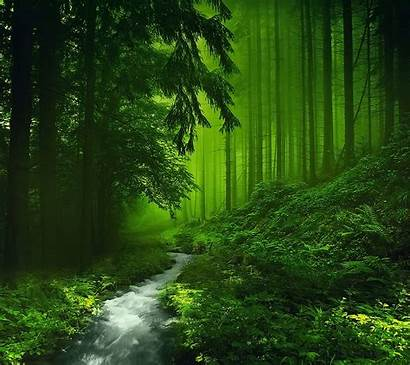 Forest Nature Background Dark Forests Paper Greens
