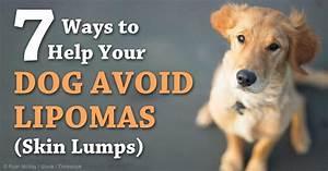 dog fatty lipoma