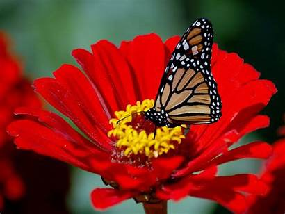 Butterfly Wallpapers Flowers Greepx Amazing
