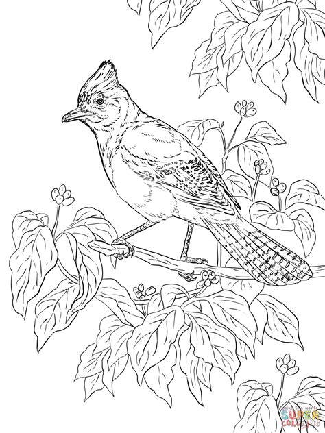 realistic stellers jay coloring page  printable