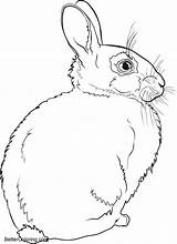 Coloring Winter Rabbit Printable Adults sketch template