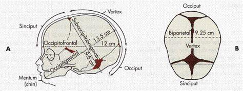 Newborn Diameter Diagram by Diameters Of The Fetal At Term A Cephalic
