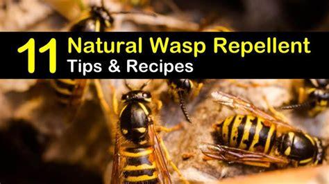 keeping wasps   natural wasp repellent tips