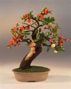 17 best images about bonsai on willow tree trees and bonsai trees