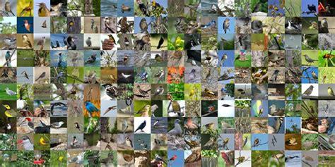 Caltech-ucsd Birds-200-2011