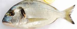 Four Cyclonique Halogène : d couvrez 2 nouvelles recettes de poisson au four ~ Premium-room.com Idées de Décoration