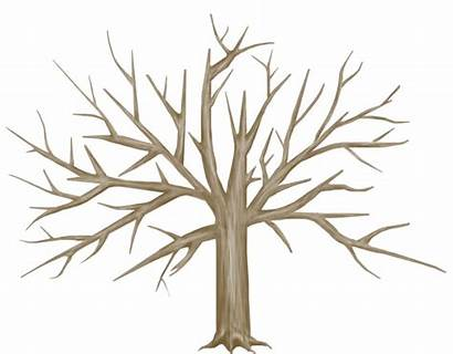 Tree Trunk Bare Template Clipart Brown Drawing