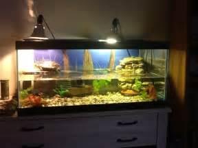 17 best ideas about turtle tanks on turtle aquarium fish tanks and reptile terrarium