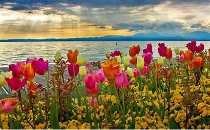 Spring Wallpapers Desktop Flower Pixelstalk