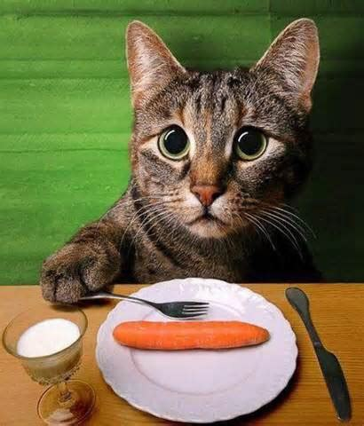 what can cats eat 3 healthy human foods your cat can eat cristina s ideas