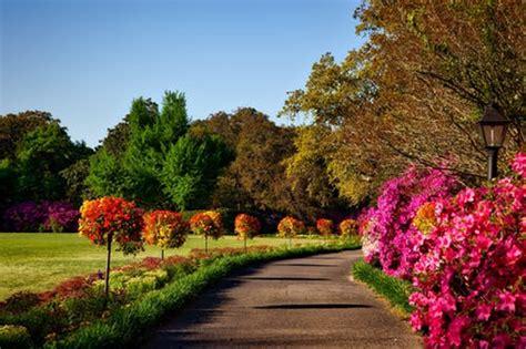 amazing flower garden  pexels  stock