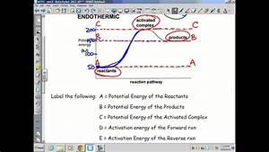 Kinetics  Thermodynamics  U0026 Equilibrium  Endothermic