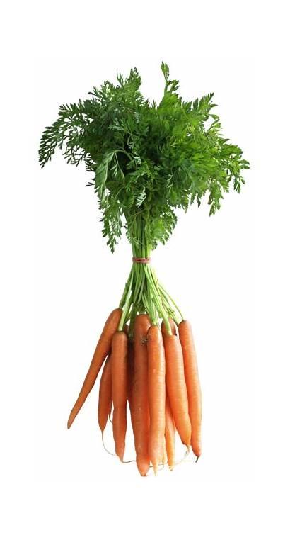 Carrot Carrots Clipart Vegetable Fruits Vegetables Carat