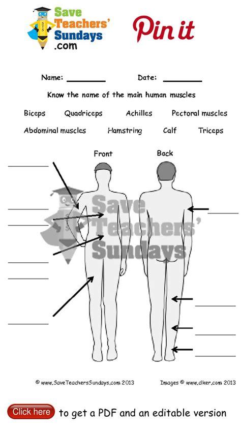 Label The Muscles Worksheet Go To Httpwwwsaveteacherssundayscomscienceyear3327lesson