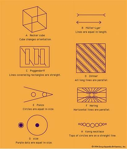 Optical Examples Illusions Different Cube Illusion Lines