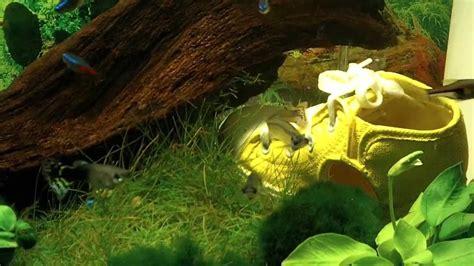 neon bleu aquarium eau douce aquarium 55 l eau douce guppys n 233 ons