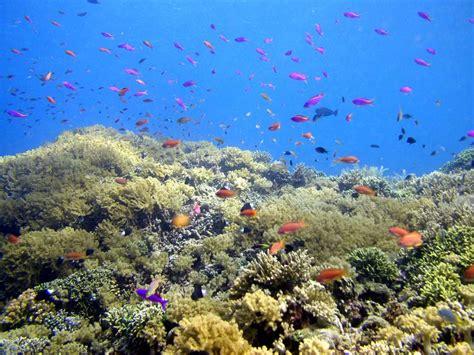 bunaken  sea paradise visit indonesia
