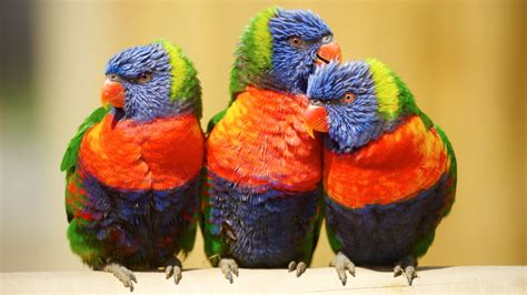 Zoo accidentally kills off 11 exotic birds - ITV News