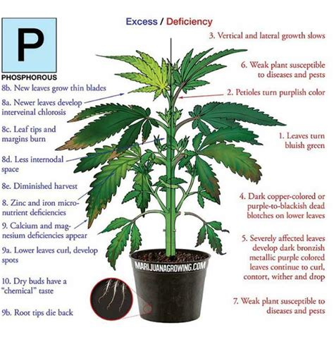 what does phosphorus do for plants fix the phosphorus deficiency in your marijuana plants