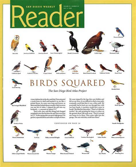 birds squared san diego reader