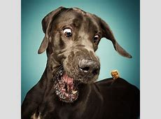 Fotos frei Schnauze So lustig sehen Hunde beim Fangen aus
