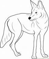 Coloringpages101 Mammals sketch template