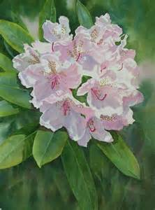 Washington State Flower Rhododendron