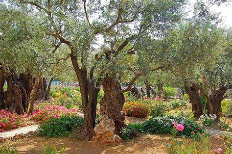 garden of gethsemane column the garden of gethsemane current in
