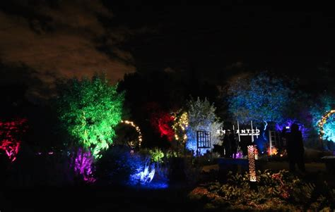 images of enchanted forest christmas lights best
