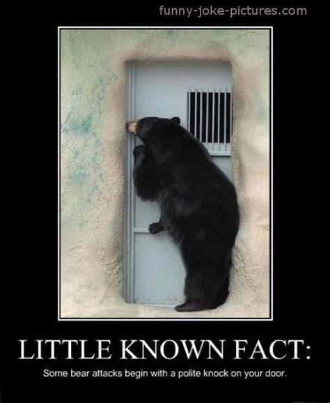 Funny Bear Memes - bearably funny bear memes funny joke pictures