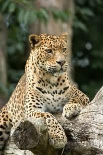 Pinterest Wild Animals