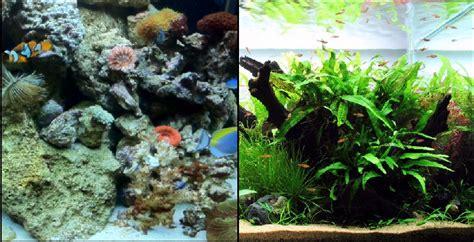saltwater  freshwater  aquarium setup filtration