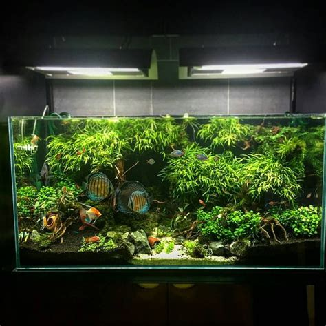 Aquascape Design Software by Consulta Esta Foto De Instagram De Aquariumcreation