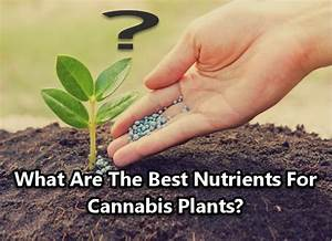 Bester Cannabis Dünger : what are the best nutrients for cannabis plants ~ Michelbontemps.com Haus und Dekorationen